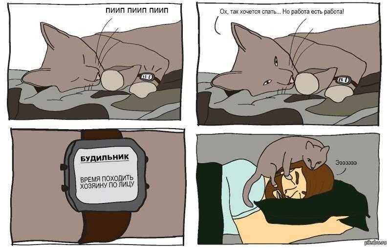 Как приучить кошку спать ночью
