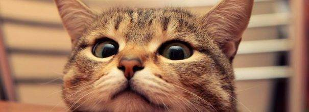 Различают ли кошки цвета, какие цвета видят коты