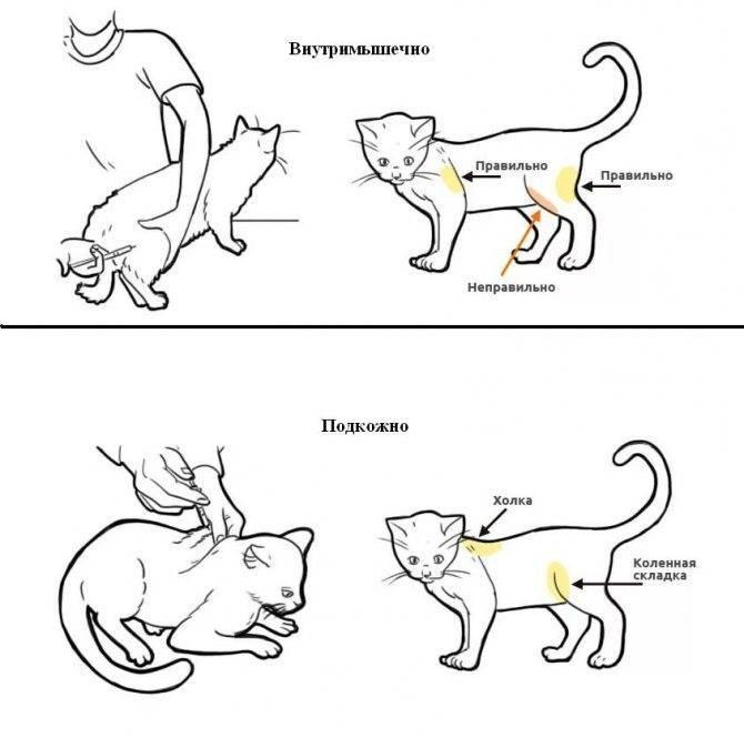 Глюкоза животным дозы. глюкоза для кошек: инструкция по применению