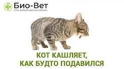 Кошка как будто кашляет что. почему кот может кашлять как будто он подавился: что делать - новая медицина