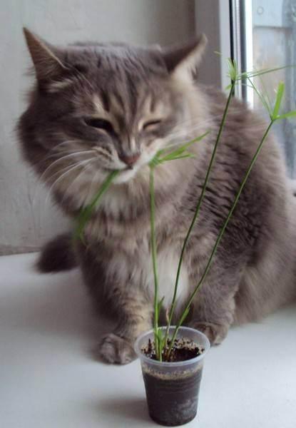 Что делать, если кот ест цветы