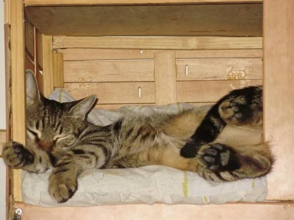 Правила, которые помогут приучить котенка к месту для сна