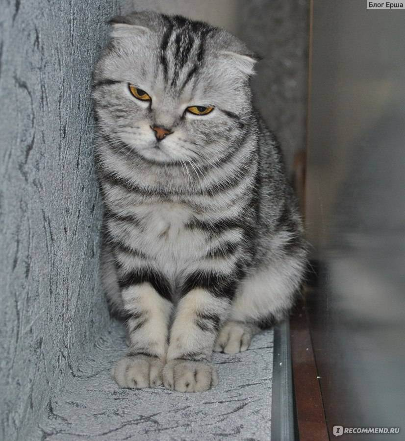 Когда кошка будет ловить мышей?