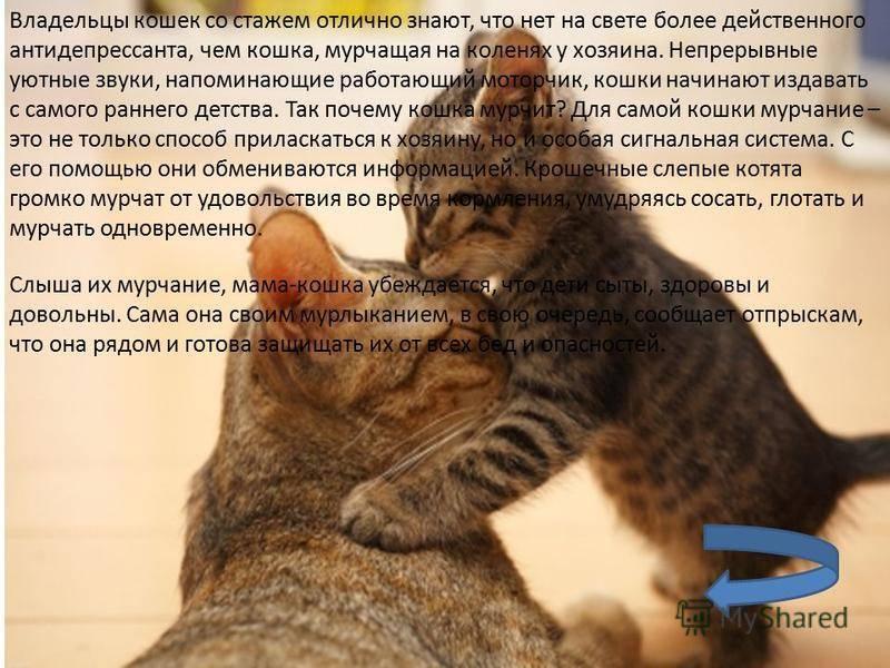 Почему кот мурчит с приоткрытым ртом
