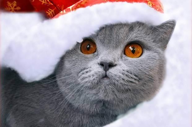 Осторожно новогодние праздники