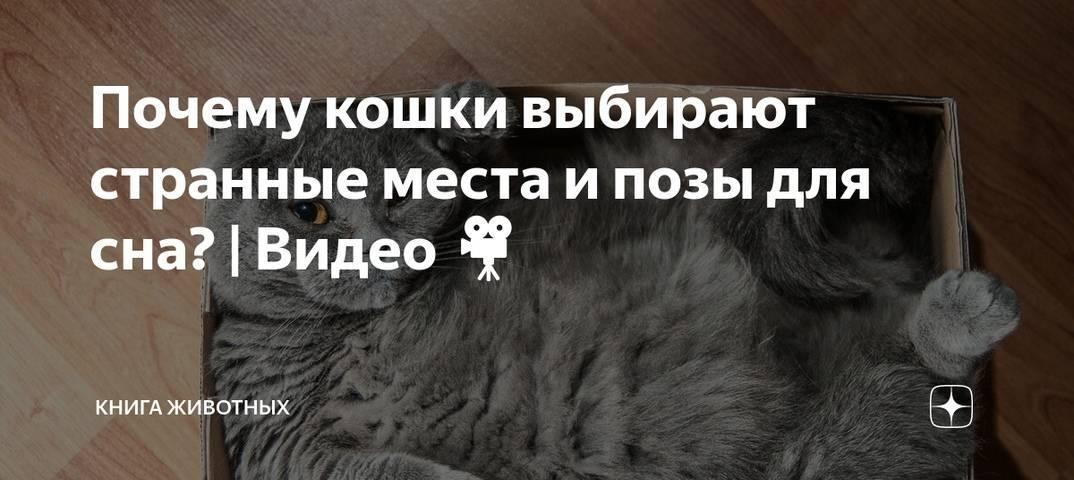 Причины газов у котов: почему они пукают, варианты как это вылечить