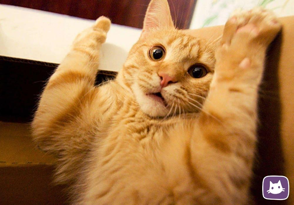 Кошка ездит на попе по полу