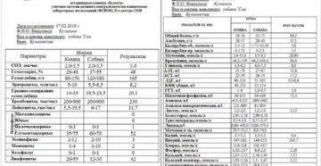 Расшифровка биохимического анализа крови у кошек таблица