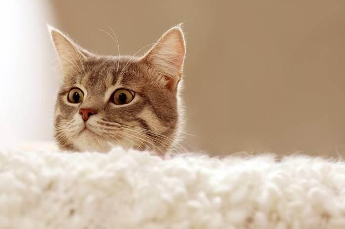 К чему снится кошка?