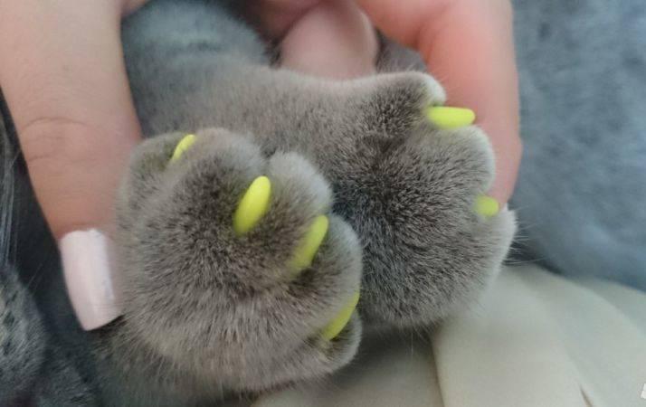 Что такое антицарапки для кошек на когти