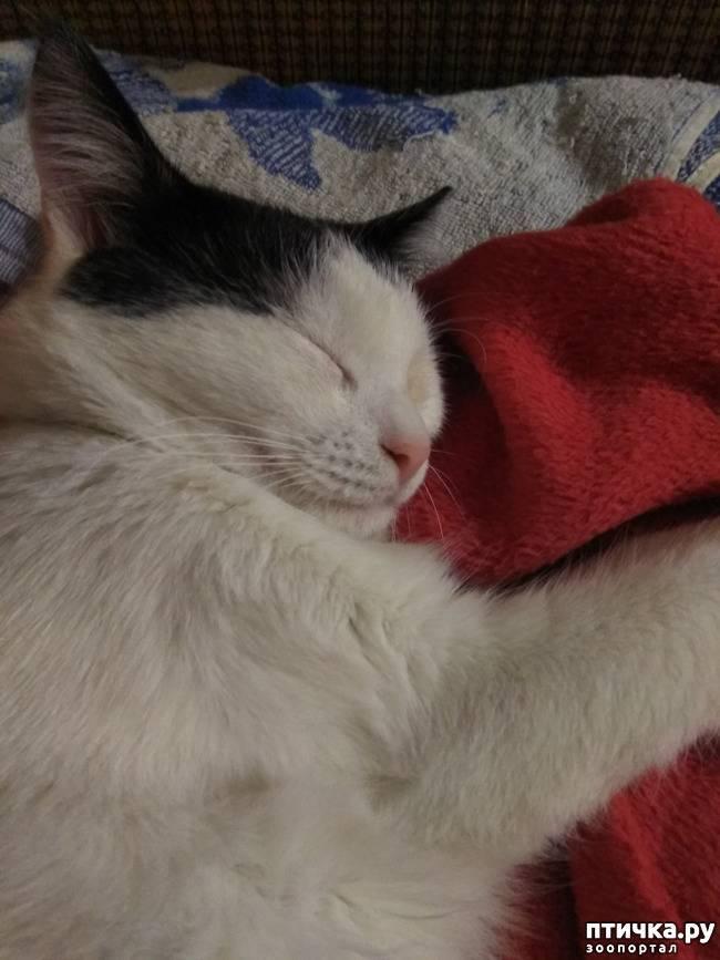 Сонник разные коты. к чему снится разные коты видеть во сне - сонник дома солнца