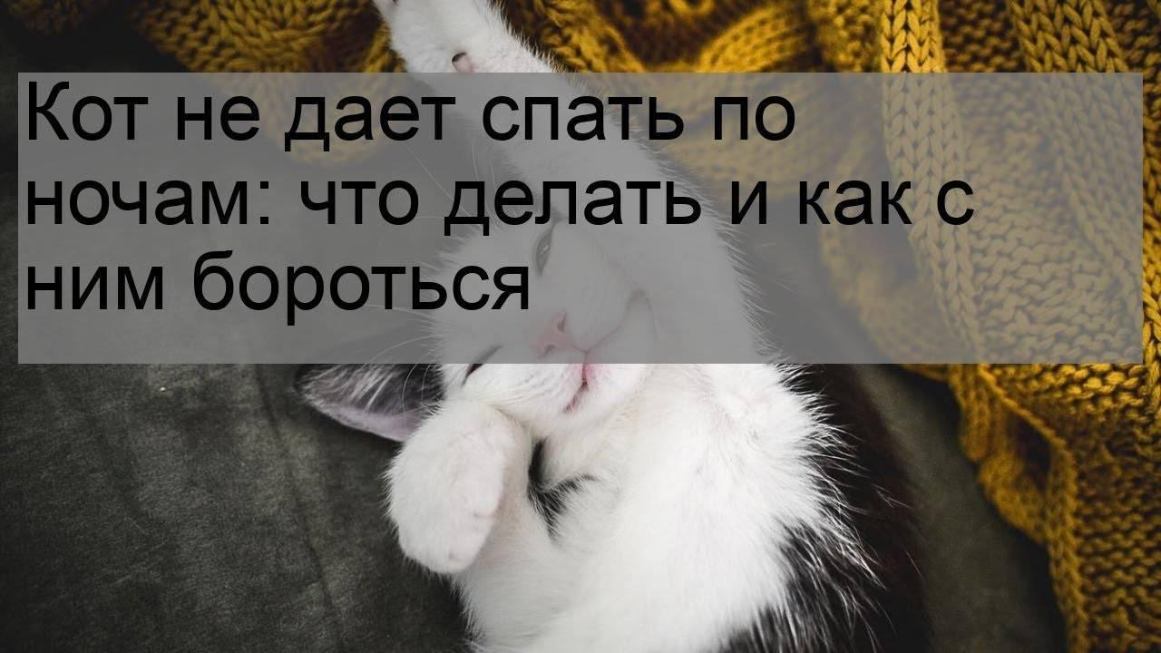 7 причин почему кот орет по ночам и не дает спать и что с ним делать