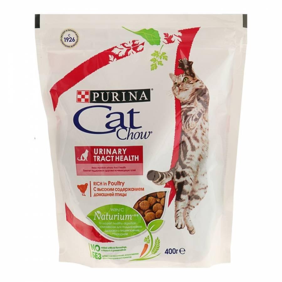 Можно ли размачивать сухой корм для кошек?   zdavnews.ru
