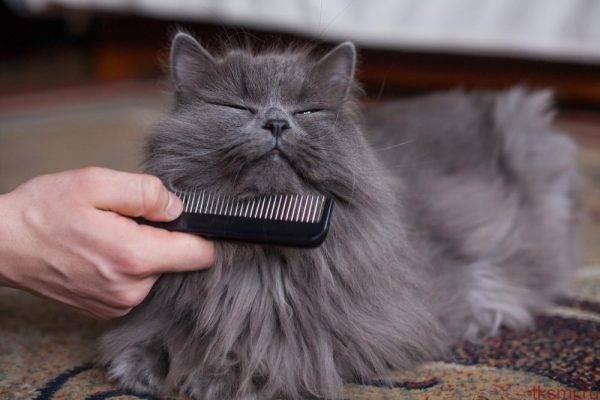 Как ухаживать за шерстью кошек - правильно ухаживаем за шерстью кошек