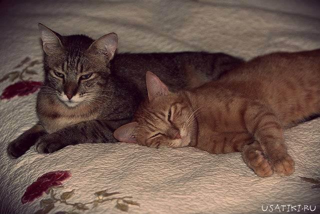 Кот дрожит после еды. кот дрожит — полный список причин от ветеринара