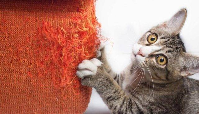 Почему у кота отказывают задние лапы?