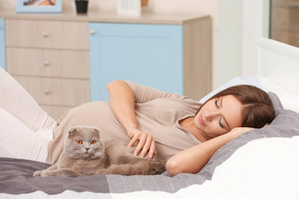 К чему снится кошка с котятами?