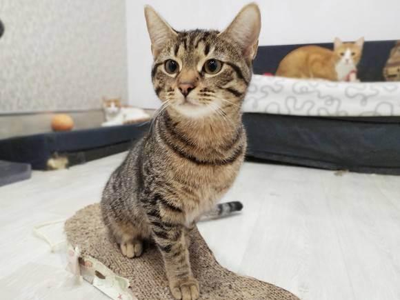 Поход с кошками: как взять с собой кошку в приключение | выживание в дикой природе