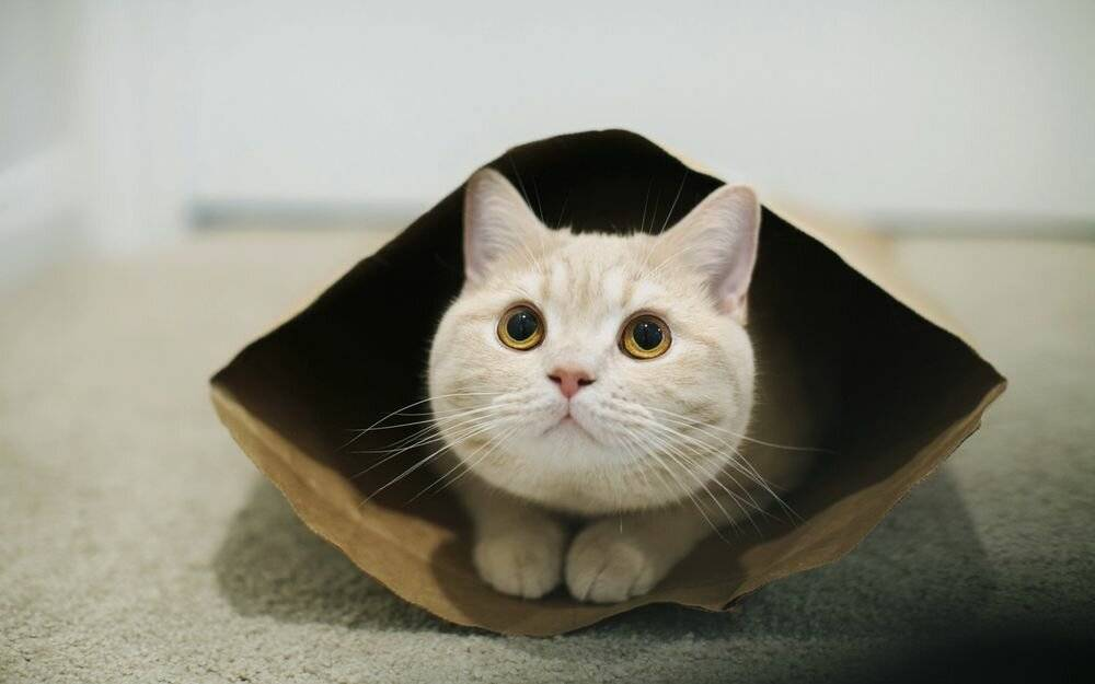 Кот постоянно лижется под хвостом — причины и нужно ли беспокоиться
