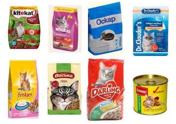 Можно ли размачивать сухой корм для кошек и котят и как это делать правильно
