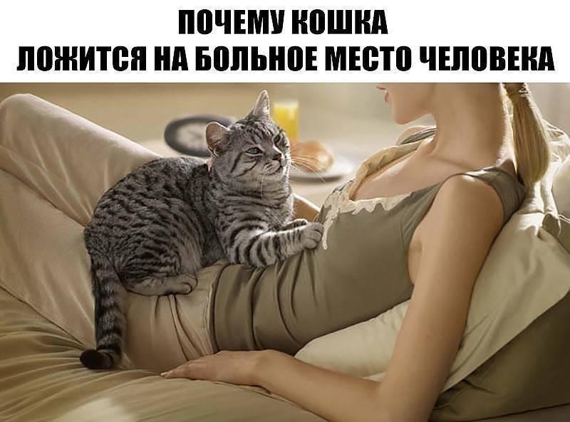 Почему кошки любят спать на людях: все объяснения от логических до суеверных