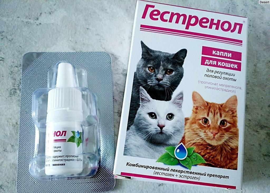 «гестренол»: таблетки и капли для кошек и котов