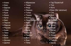 Популярные клички для котов — рассматриваем по полочкам