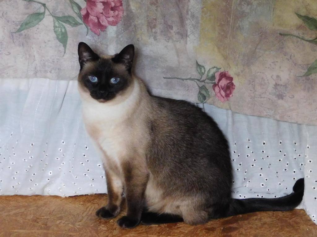 Как назвать кошку - имена и клички для кошек