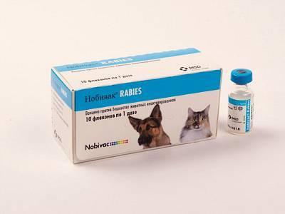 Нобивак рабиес (nobivac rabies): инструкция по применению компонента r для кошек и собак. показания и противопоказания. как правильно использовать? зачем делать такую прививку?