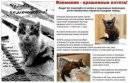 Загробный мир кошек: куда попадают души домашних животных после смерти с точки зрения разных религий