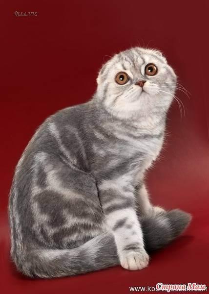 Как быть с подобрашкой? нужен совет! добавила фото кошки. - запись пользователя марина (llall) в сообществе домашние животные в категории помогите советом - babyblog.ru