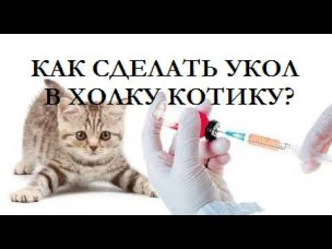 Укол кошке — делаем правильно