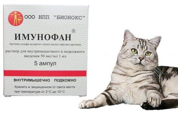 Как колоть глюкозу кошке при отравлении