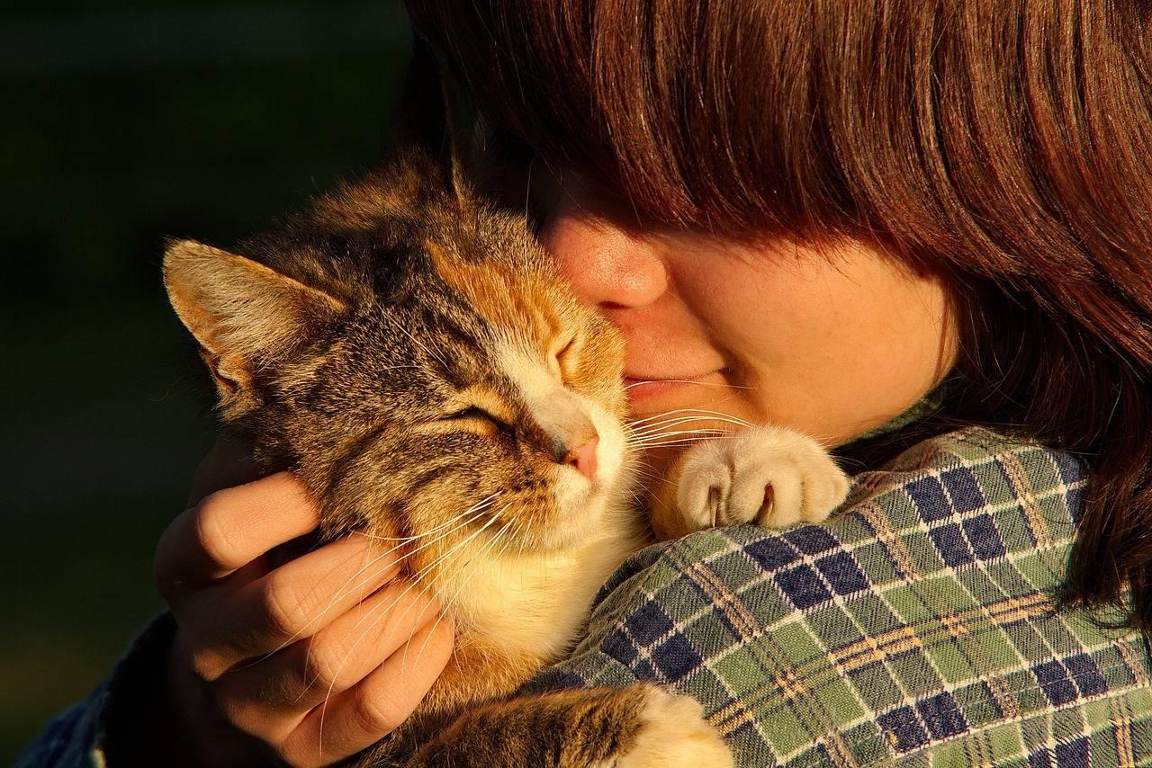 Повадки кошек, говорящие о любви и выражающие ее к хозяину, признаки, как понять, что кот проявляет любовь к хозяйке