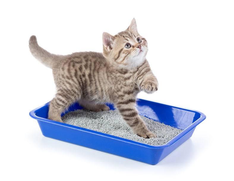 Почему кот ест наполнитель для туалета что делать