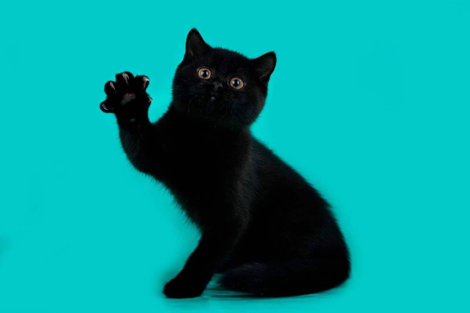 Какое имя котенку. как назвать кота мальчика, самые интересные, оригинальные и крутые клички для котов
