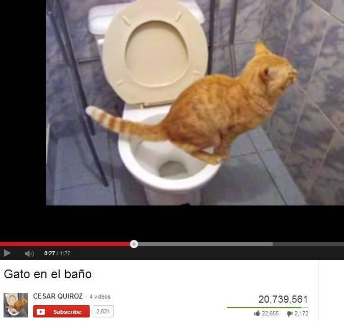 Запор у кошки: как справиться с проблемой