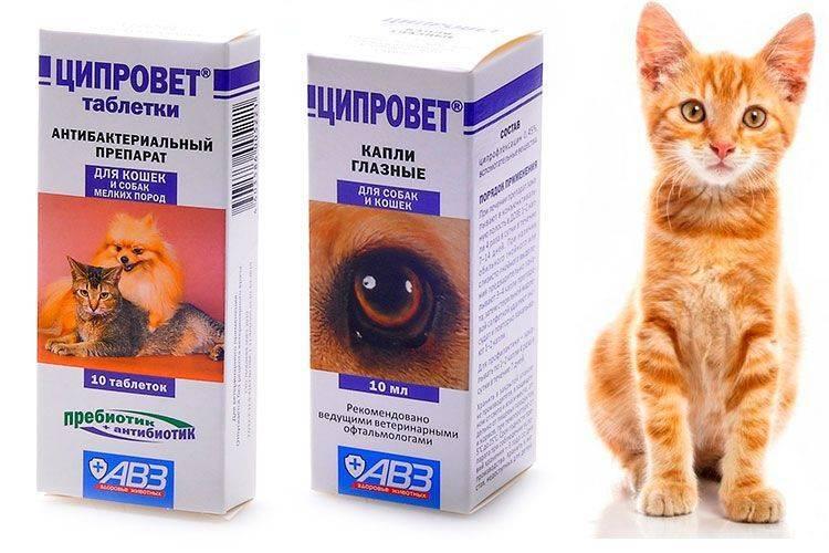 Капли ципровет для кошек: инструкция по применени и отзывы