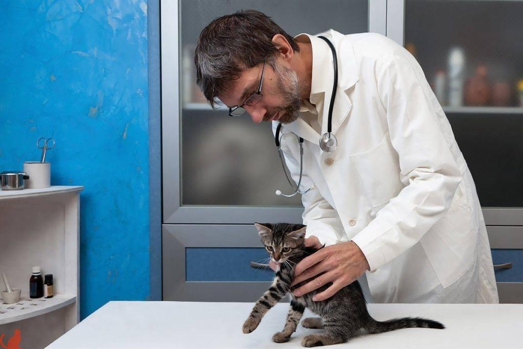 Нужно ли кастрировать домашнего кота, насколько это вредно и опасно