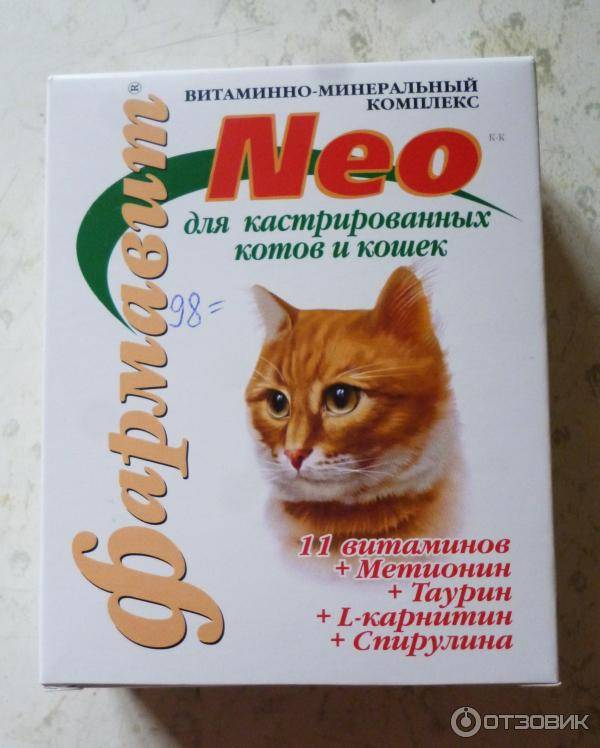 Примеры необходимых витаминов для котов, какие лучше и для разных целей