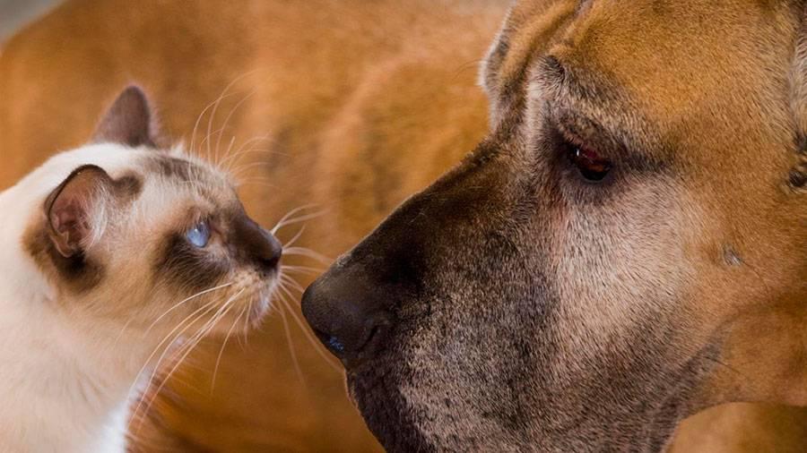 Как подружить собаку с собакой: эффективные методы и советы