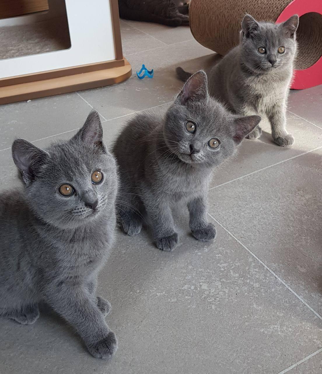 Приметы про цвет кошки: черепаховая, черно-белая, с разными глазами