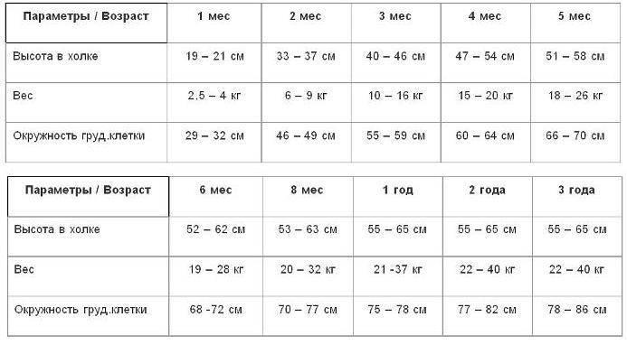 Щенки немецких овчарок в 4 месяца (19 фото): особенности окрасов. сколько щенки должны весить? правила питания и нормы веса