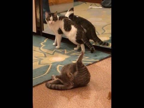 Кот метит в квартире? кастрация котов и уход после операции. кот после кастрации