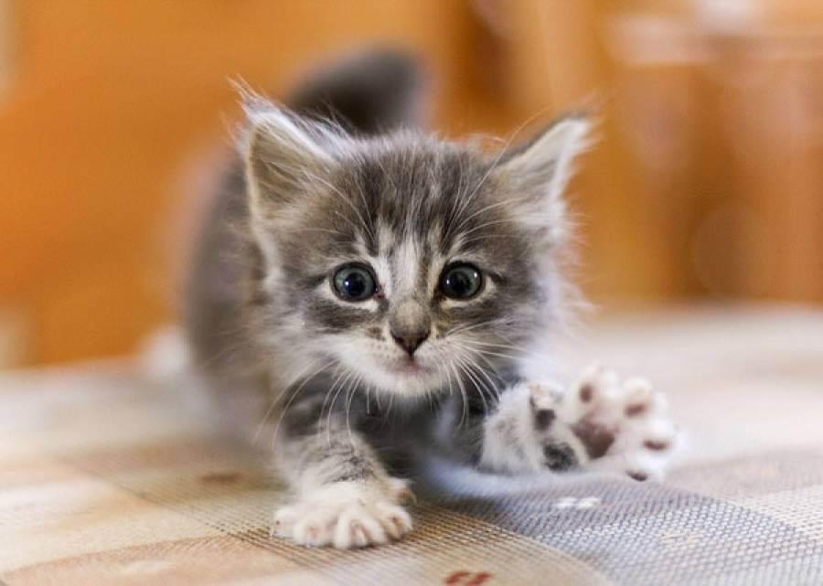 Приданое для скорейшей адаптации котёнка в новом доме