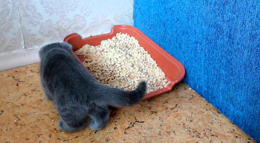 Древесный наполнитель для кошачьего туалета (18 фото): как пользоваться и как часто менять комкующийся наполнитель для кошек? можно ли смывать его в унитаз? как выбрать лучший? отзывы