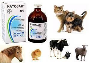 Катозал, о чем вы не знали, аналоги, инструкция, противопоказания. инструкция по применению катозала для животных, аналоги катозал в ветеринарии