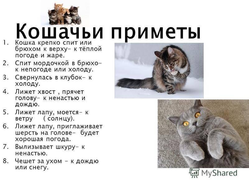 Кот ушел из дома: народная примета
