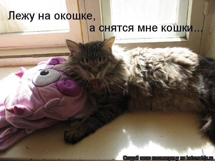 Сонник подобрать кошку. к чему снится подобрать кошку видеть во сне - сонник дома солнца