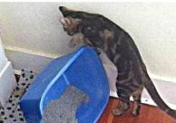 Почему кот ходит мимо лотка по большому
